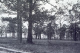Undeveloped Terrain, 1913